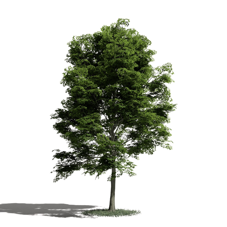 Tree 14 amb1