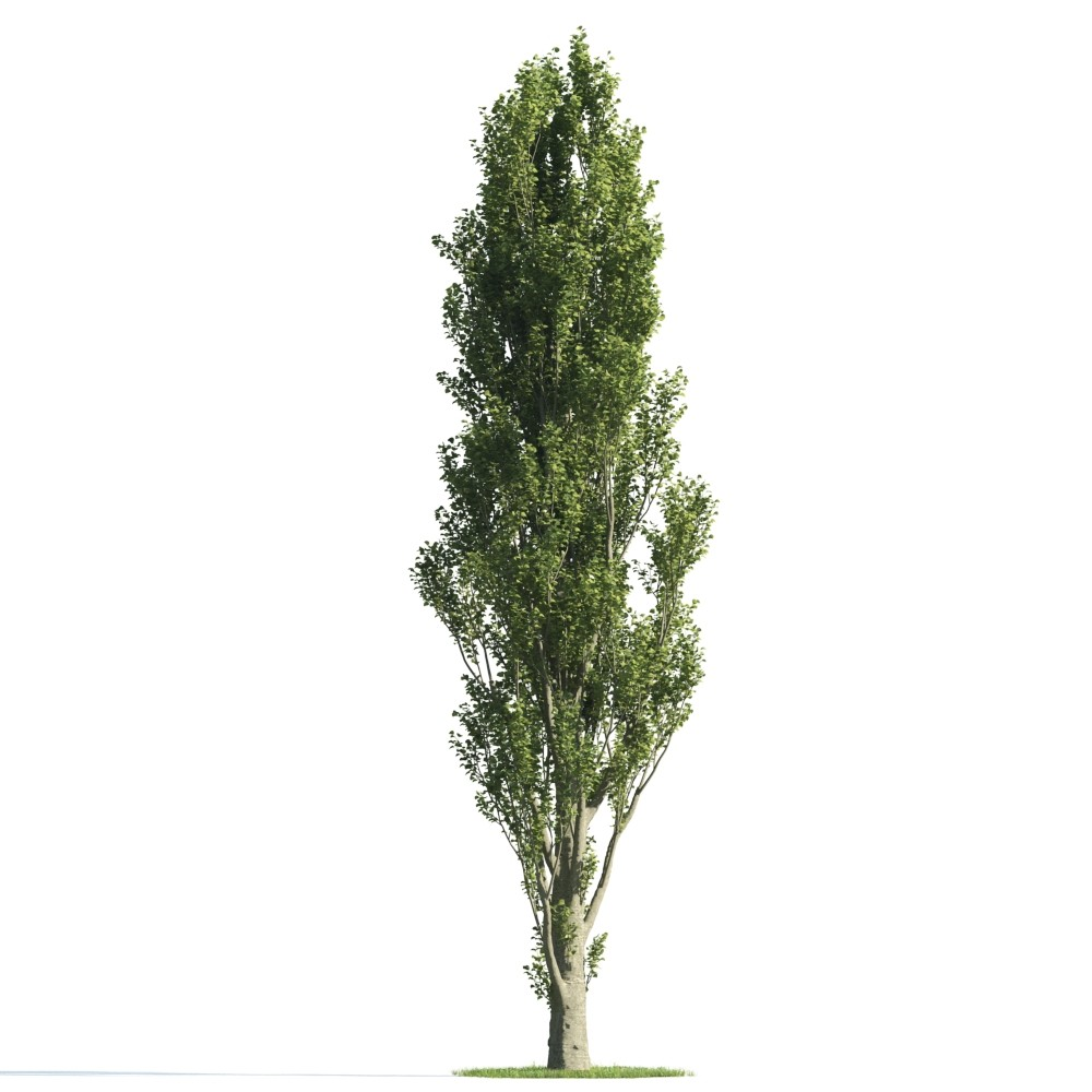 Tree 25 am176