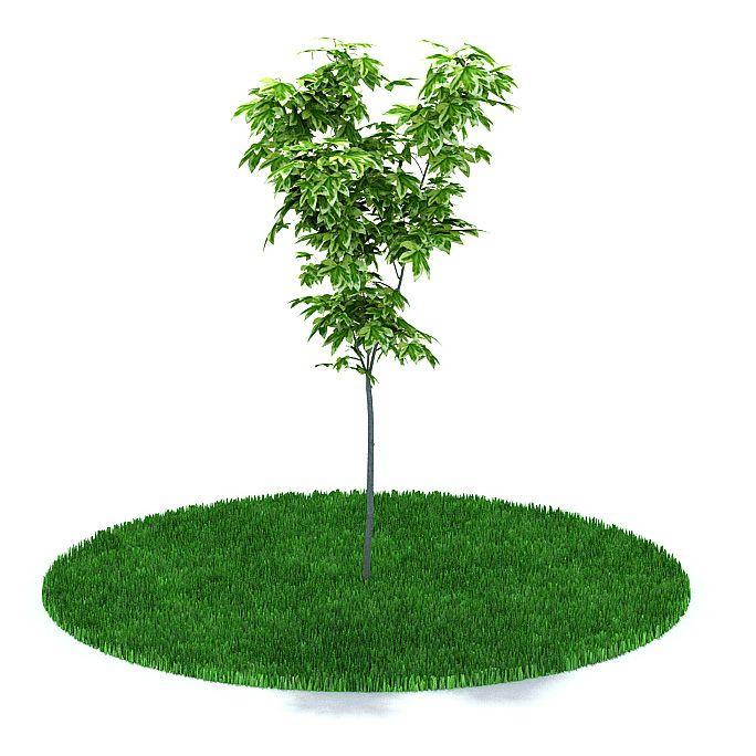 Plant 18 AM31 Archmodels