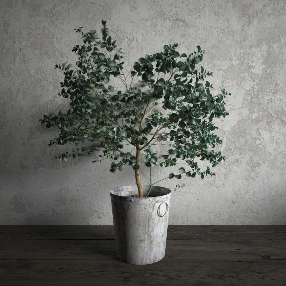 plant 28 am173