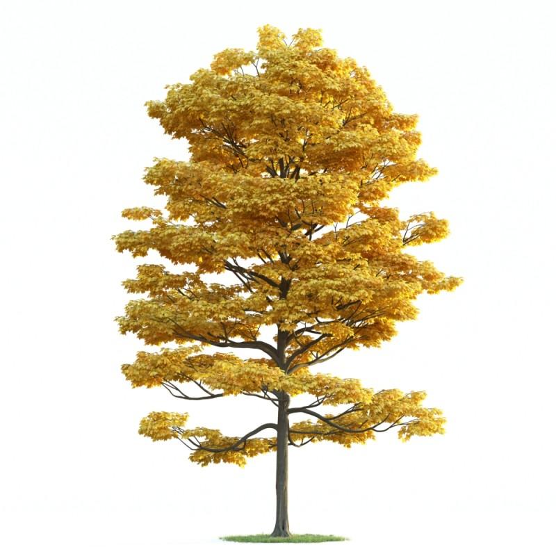 tree 30 AM163 Archmodels
