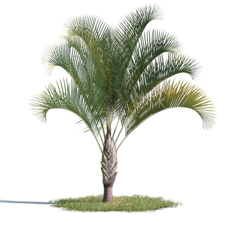 tree 67 AMC01