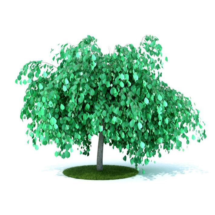 plant 23 AM105 Archmodels