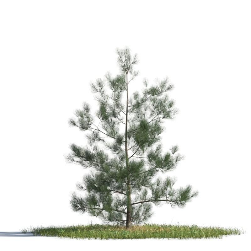 tree 74 AMC01