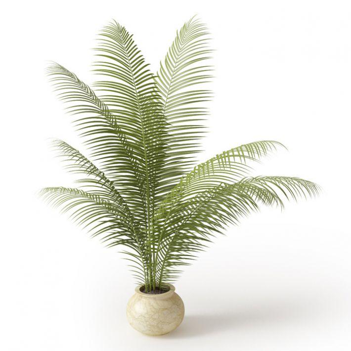 Plant 3 Archmodels vol. 66