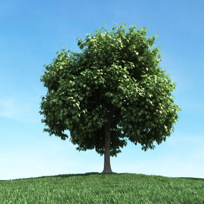 tree 32 am106