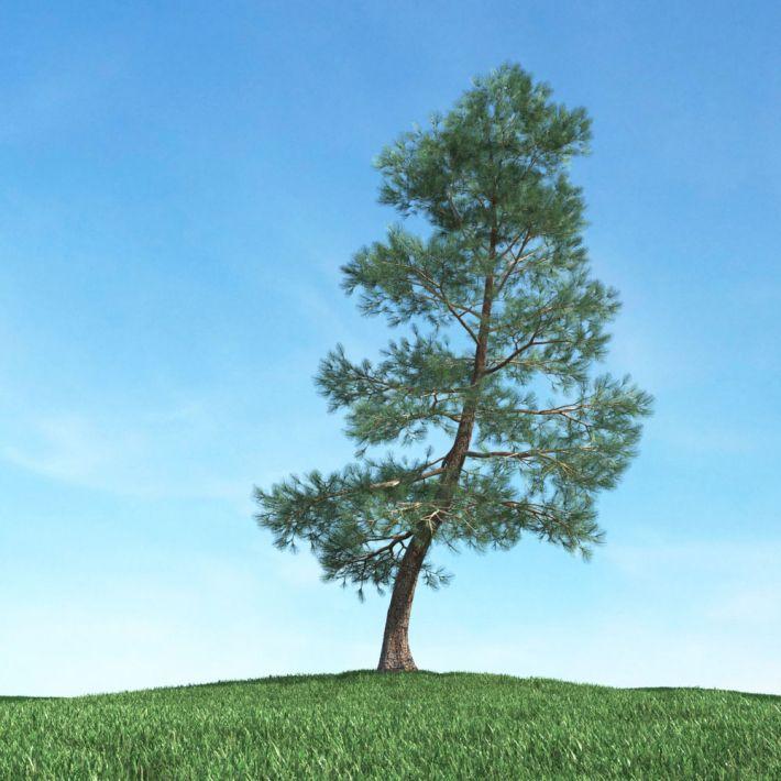 tree 15 am117