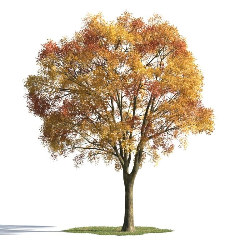 tree 57 AMC01