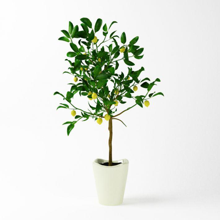 Plant 64 AM75