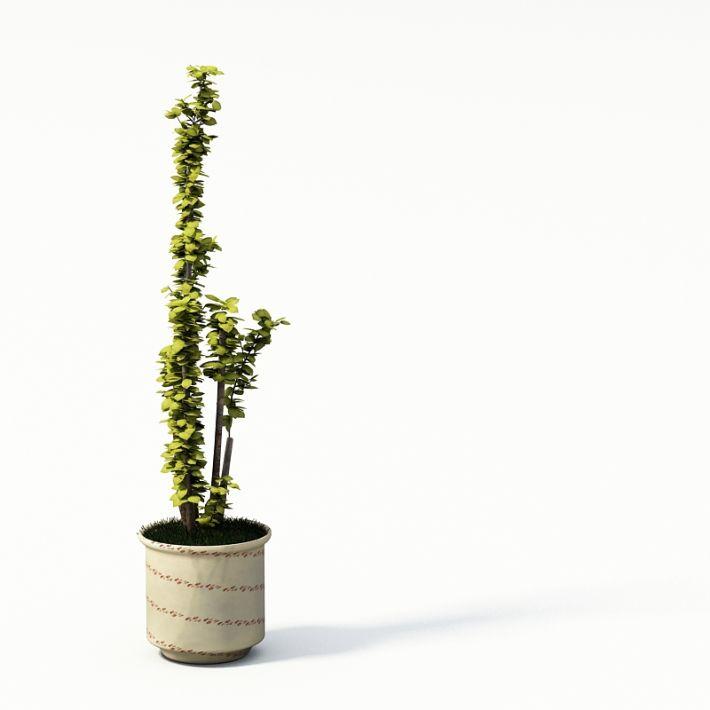 Plant 12 AM24