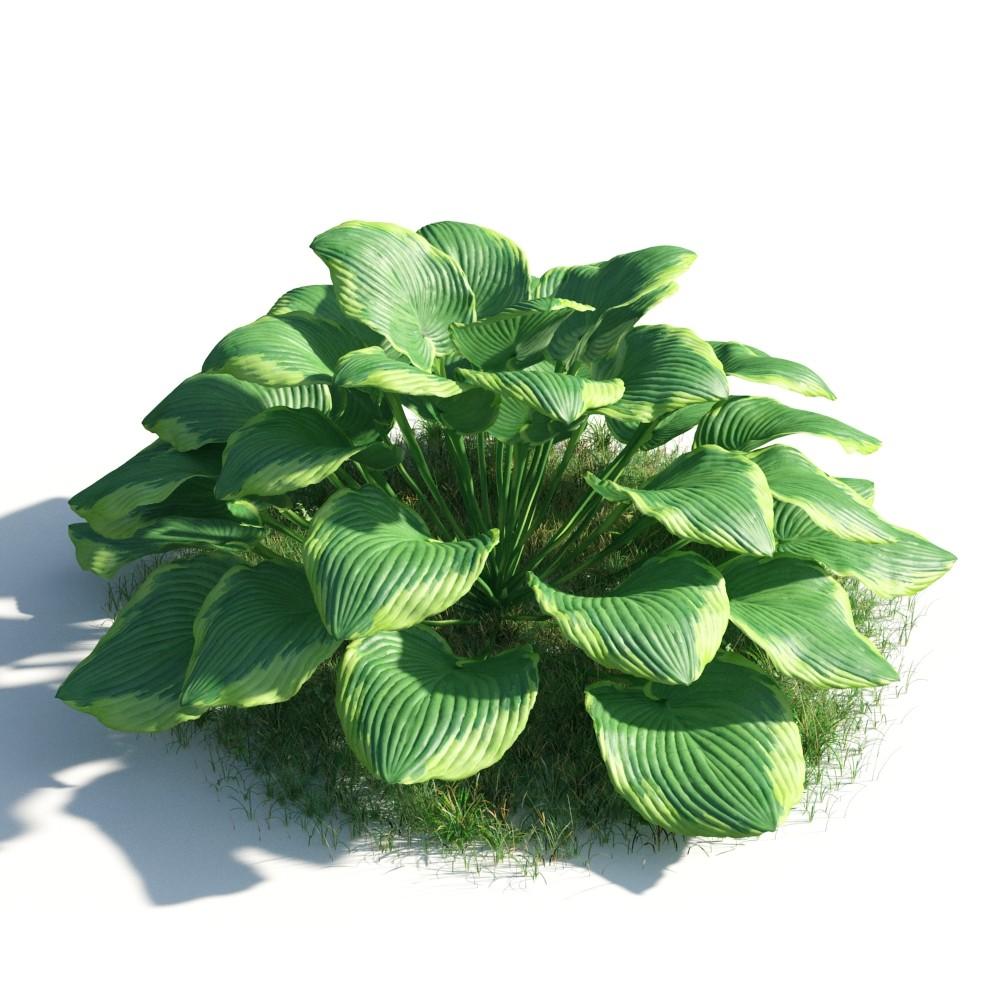 plant 51 AM183