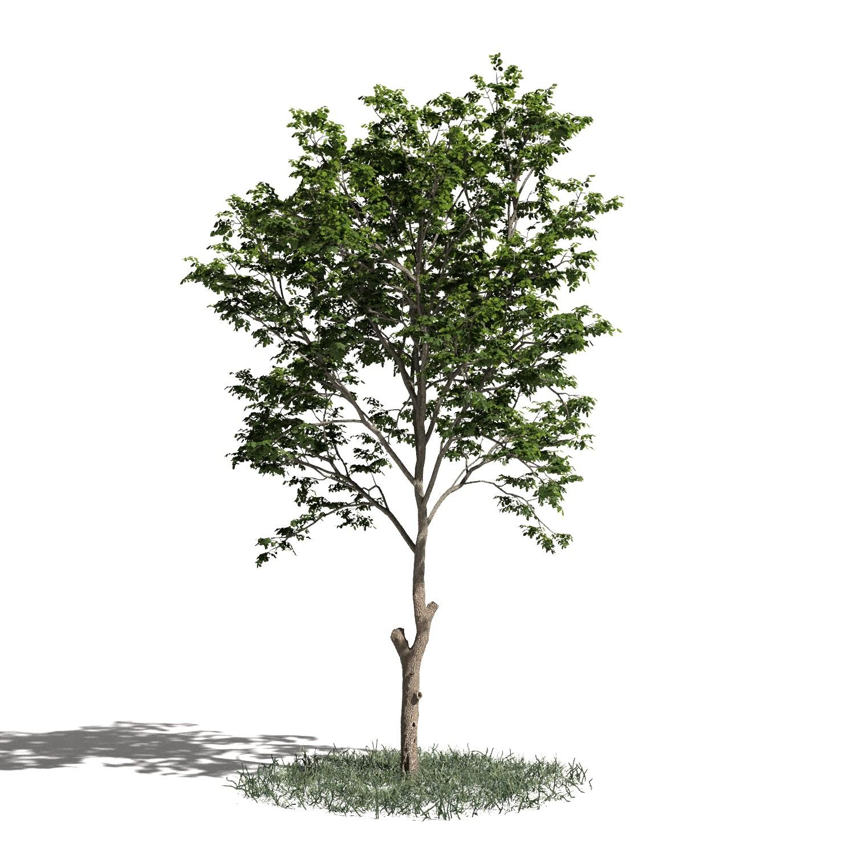 Tree 07 amb1