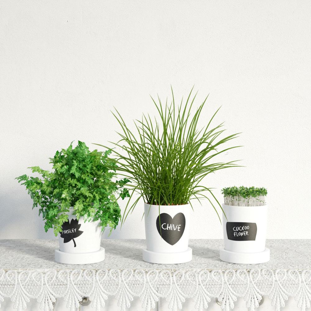 plant 36 AM141 Archmodels