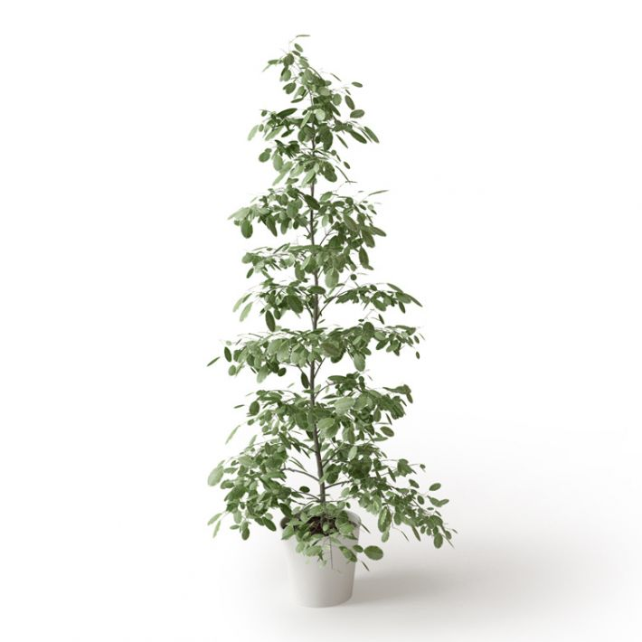 Plant 64 Archmodels vol. 66