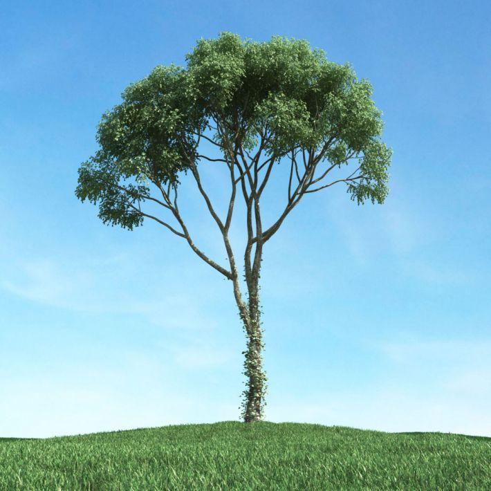 tree 33 am117