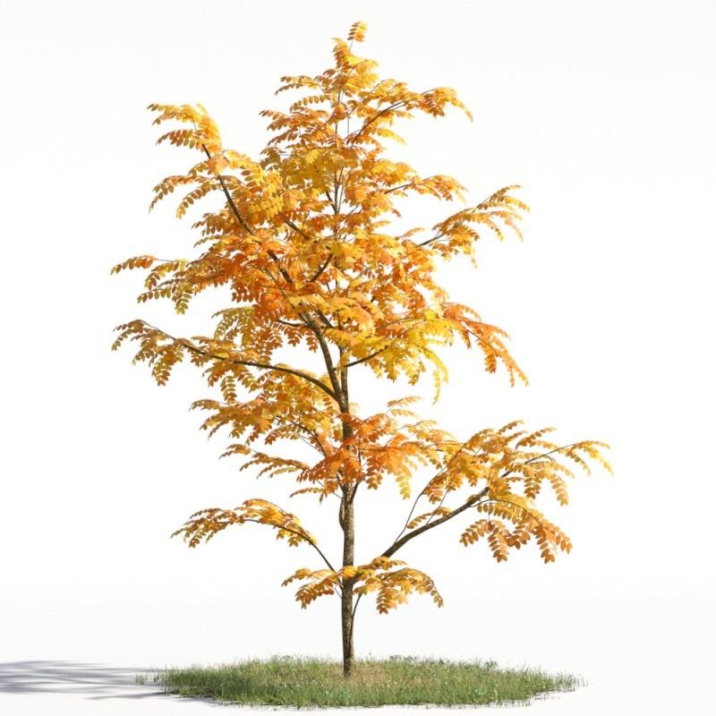 tree 55 AMC1