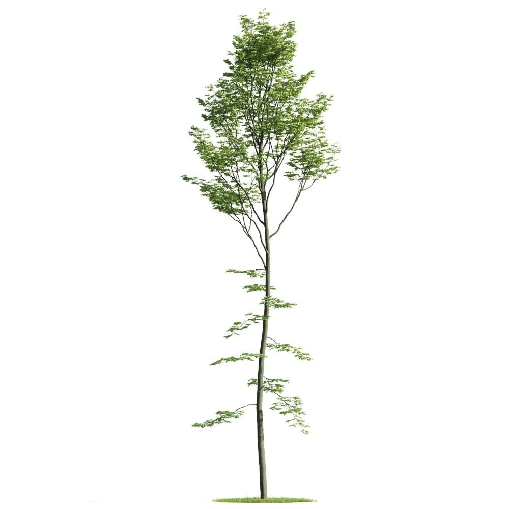 Tree 34 am176