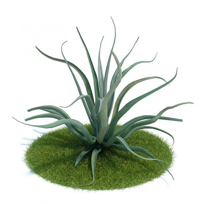Agave vilmoriniana Plant 46 AM61 Archmodels