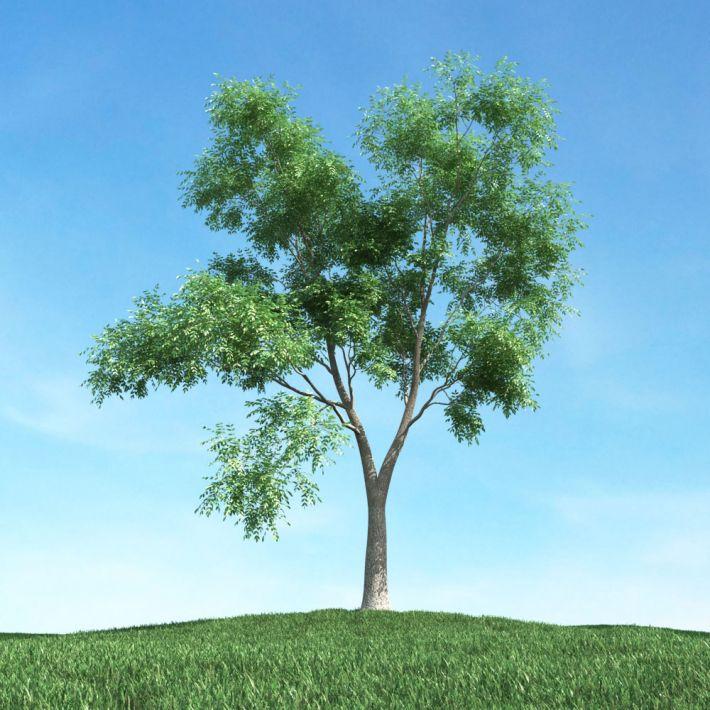 tree 36 AM106 Archmodels