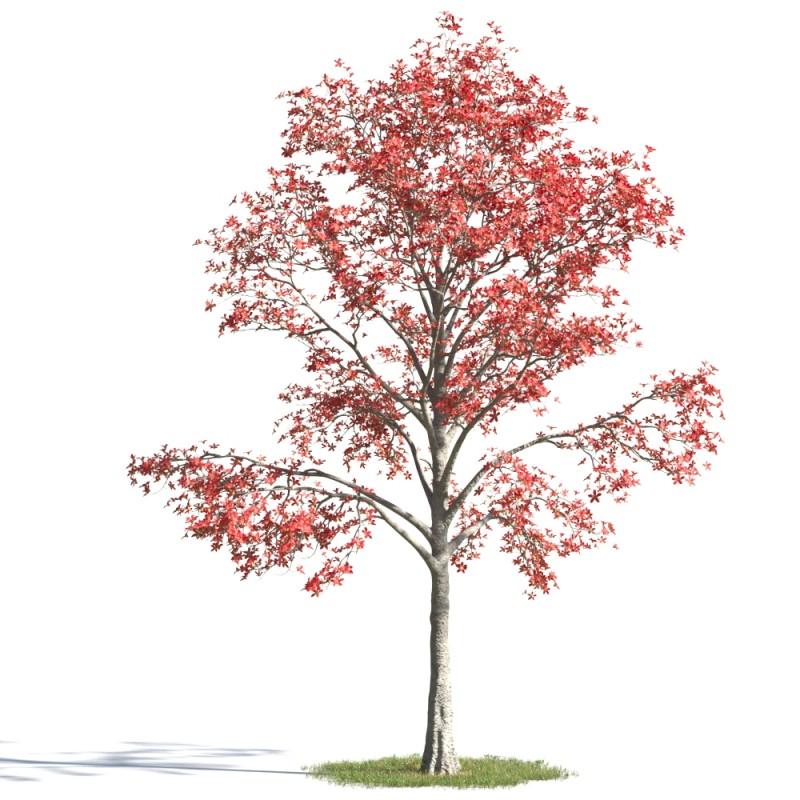 tree 8 AMC1