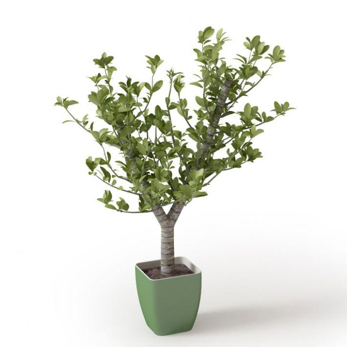 Plant 21 Archmodels vol. 66