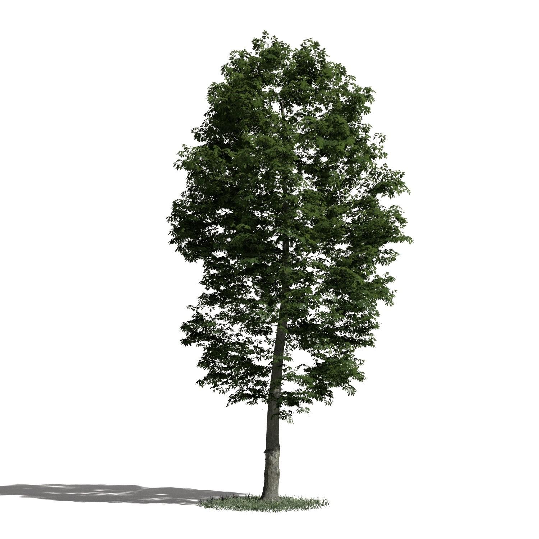 Tree 54 AM1 for Blender Archmodels