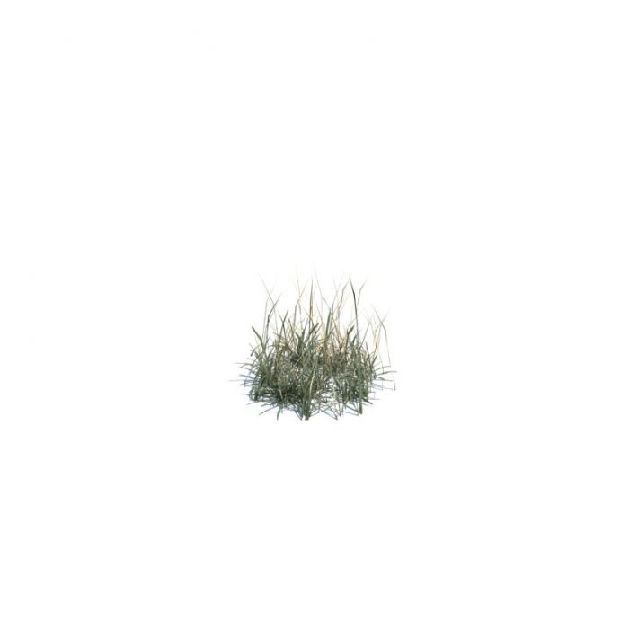 simple grass small 136 am124