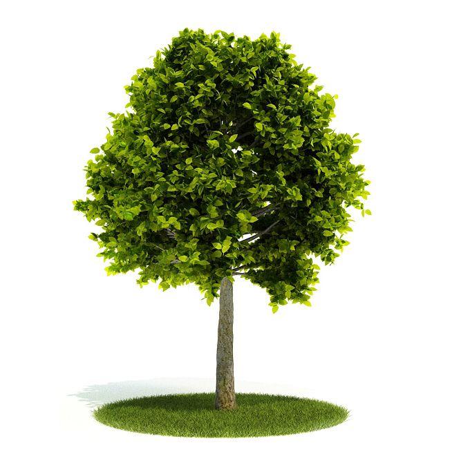 Plant 51 AM52 Archmodels