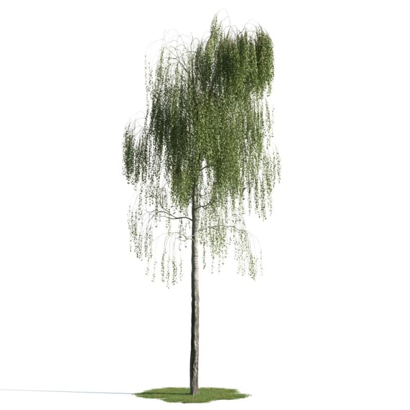 tree 16 AM163 Archmodels
