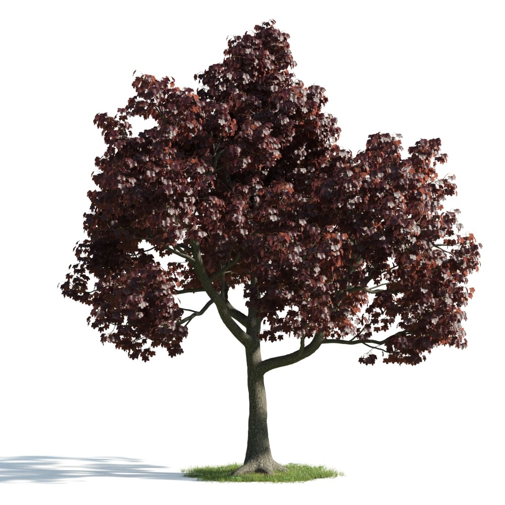 Tree 21 am176