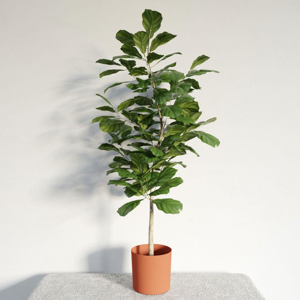 plant 21 AM141 Archmodels