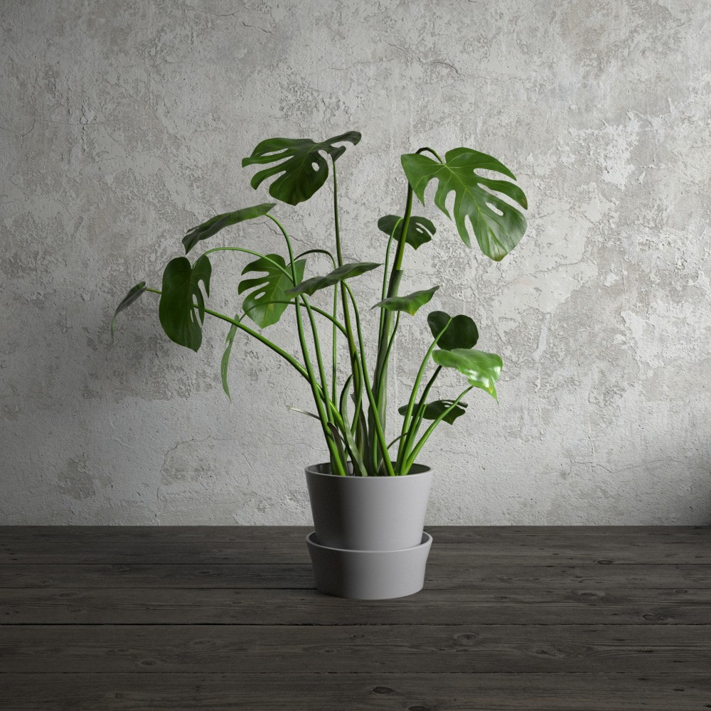 plant 23 AM173 Archmodels