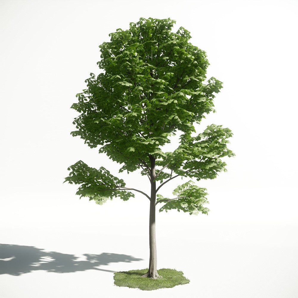 Tree 28 AM1 for CryEngine Archmodels