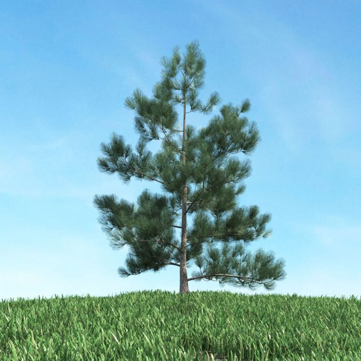 tree 13 AM117 Archmodels