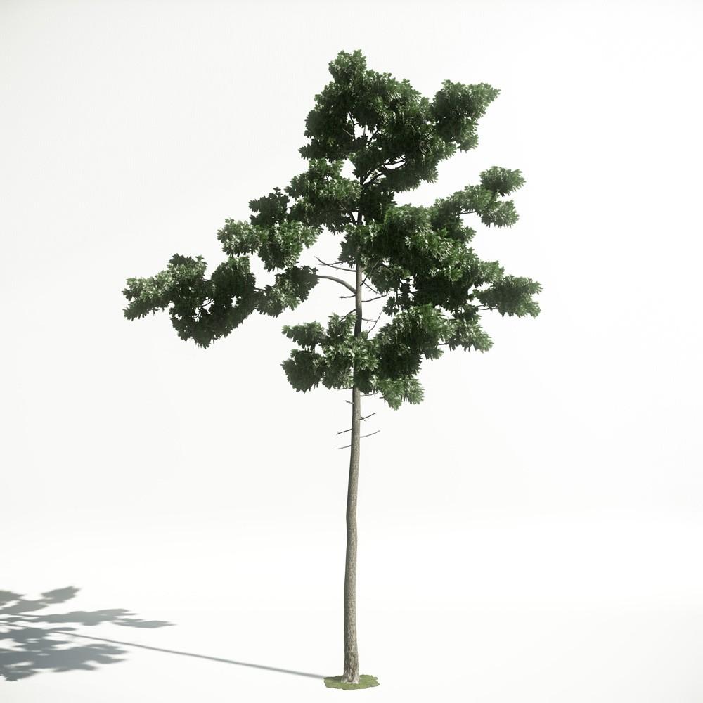 Tree 44 amce1