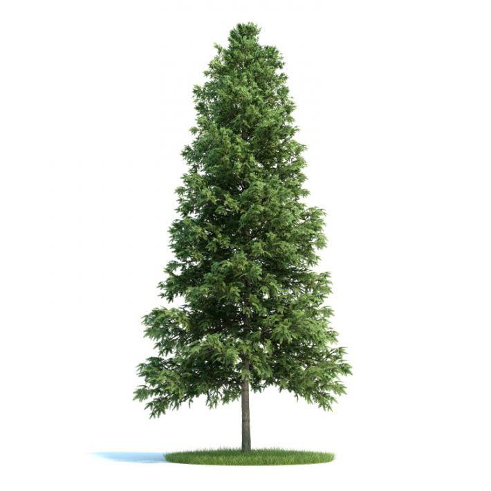 Picea abies Plant 51 AM58 Archmodels