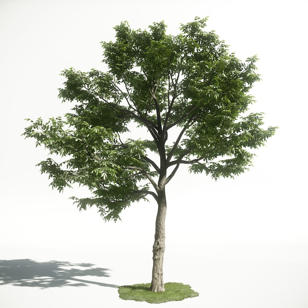Tree 50 AM1 for CryEngine Archmodels
