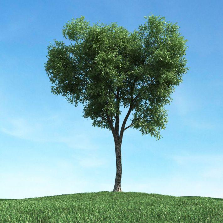 tree 38 AM117 Archmodels