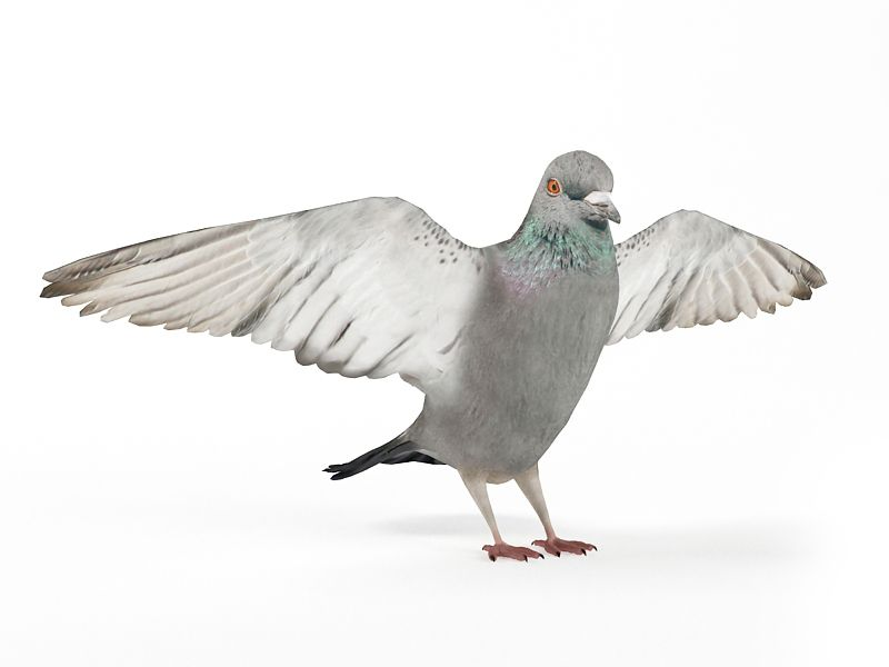 pigeon 9 AM83 Archmodels