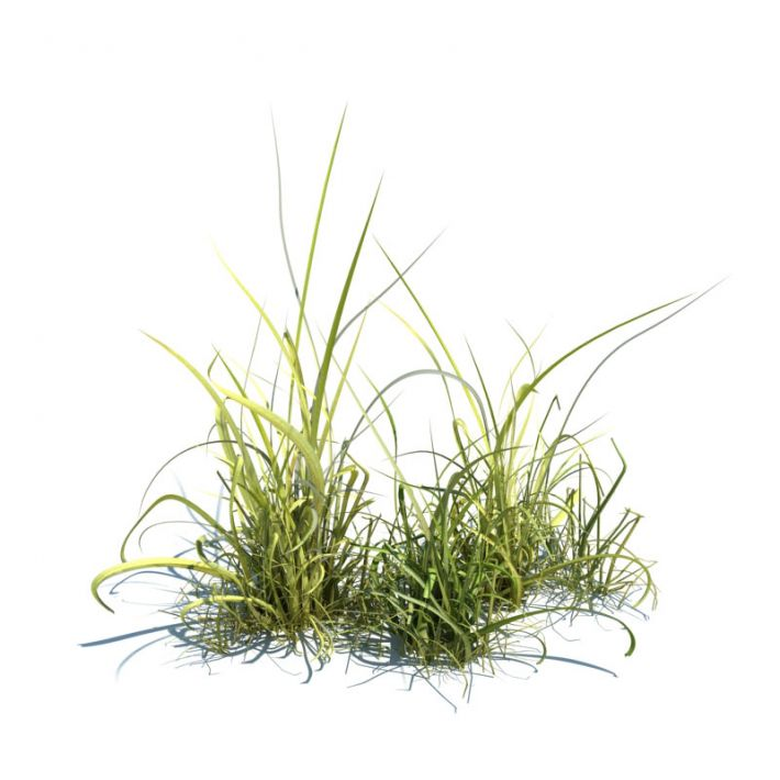 simple grass 38 AM124 Archmodels