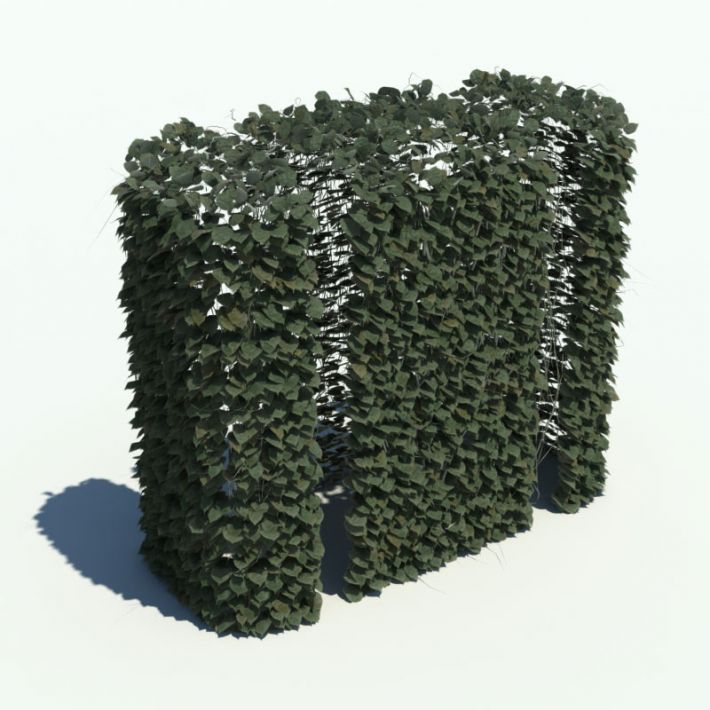 hedge 142 AM126 Archmodels