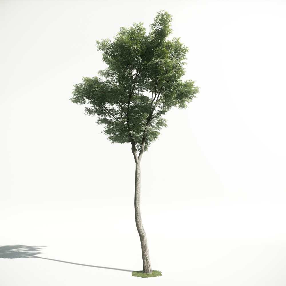 Tree 46 AM1 for CryEngine Archmodels