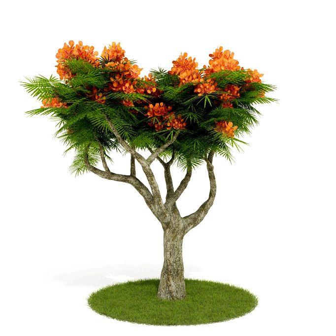Plant 17 AM52 C4D