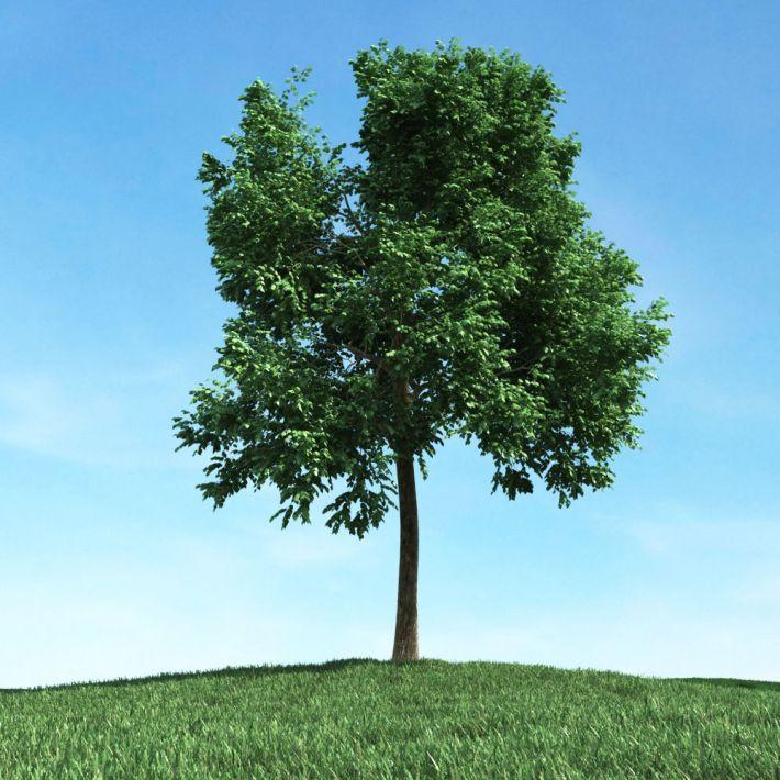 tree 35 AM106 Archmodels