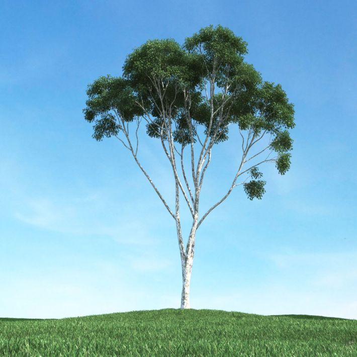 tree 28 am106