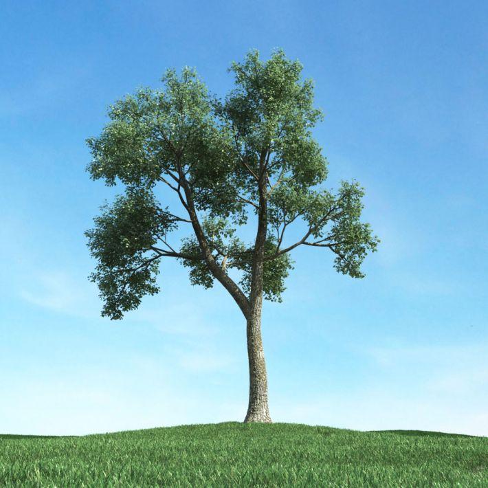 tree 47 AM117 Archmodels