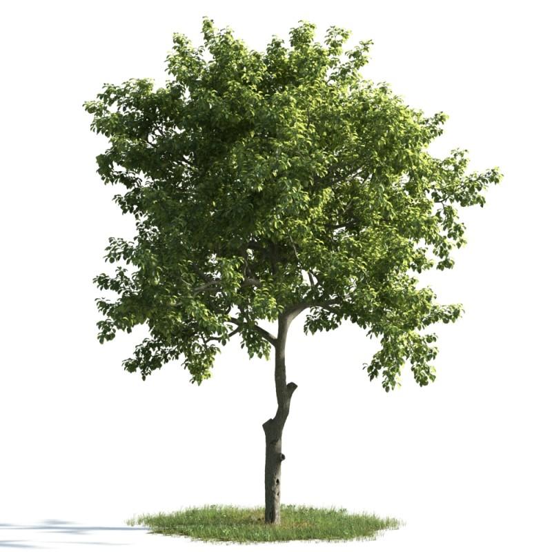 tree 8 AM163 Archmodels