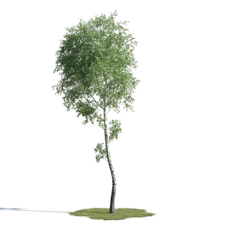 tree 90 AMC01