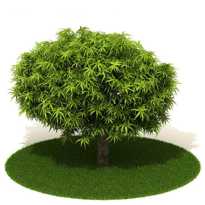 Plant 9 AM42 Archmodels