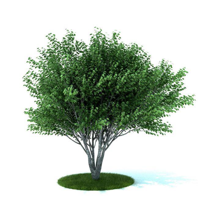 plant 37 am105